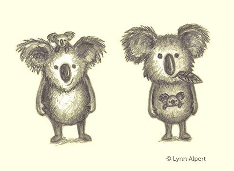 Sketches of koala bears by children's illustrator Lynn Alpert