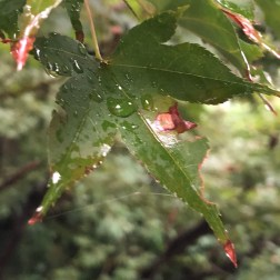 Day 11: Every leaf bore the mark of today's deluge.