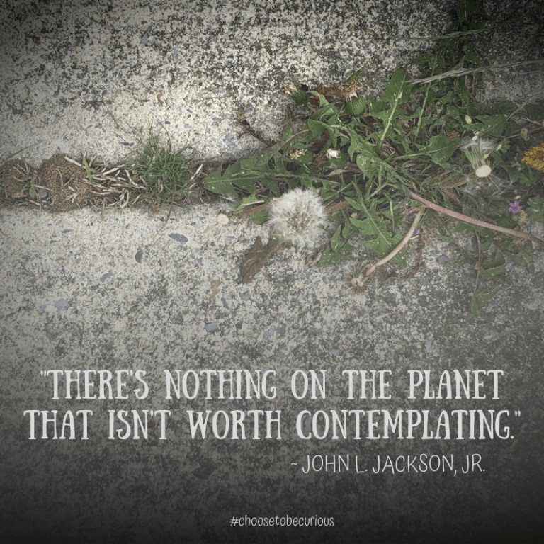Jackson - There's nothing on the planet that isn't worth contemplating