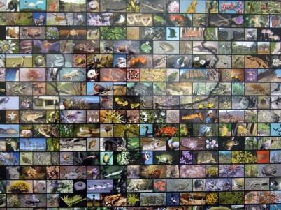 Mosaic of tourism photos, Chile