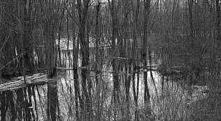 woods in spring flood