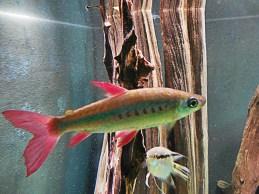 fish Montreal Biodome