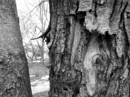 DSCN1625 tree bark