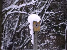 bird nesting box covered in snow