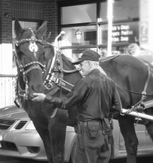 Horse and caleche Byward Market street photography