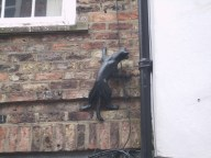 One of the cats on the York cat trail