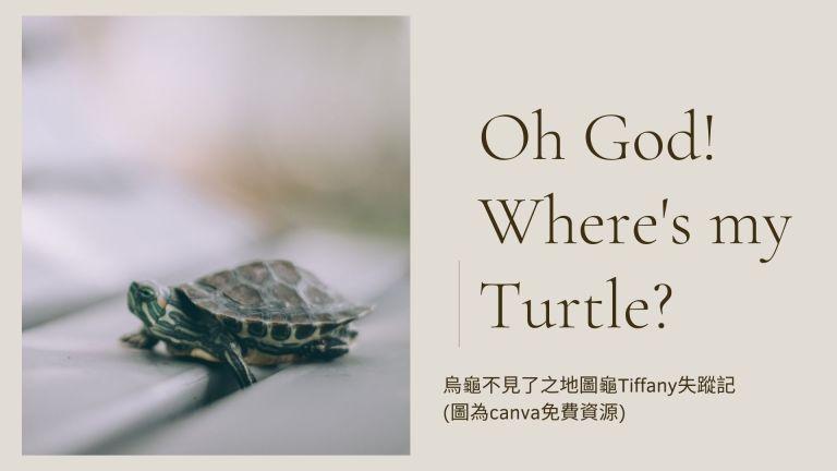 Where is my turtle? 我的烏龜不見了!
