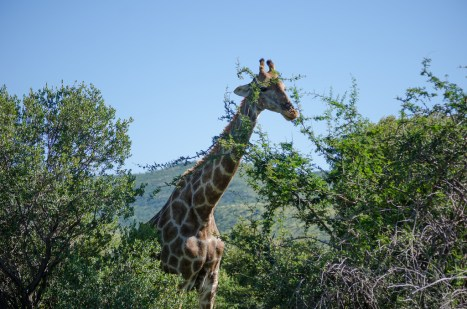 On Safari in Pilanesburg, South Africa