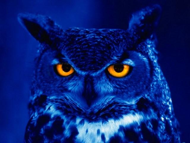 night_owl_1