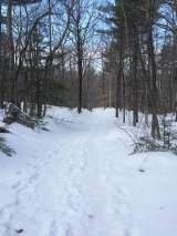 The Brook trail is relatively easy compared to the other trails to the summit.