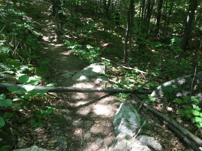 Just a wee blowdown. You can see an example of some really awesome trail maintenance underneath it, though! :)