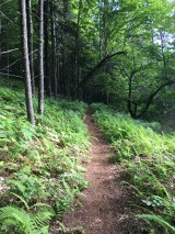 Such a beautiful trail, bordered by a fern-covered forest.