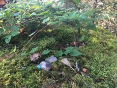 """By the top step on the Brook trail, just off the top of the ski slopes, someone made a little fairy garden on top of this big, moss-covered rock. Kind of cute. I sort of don't mind it in terms of LNT, since this is a ski resort and not remote wilderness - though I suppose it could be considered littering... I assume the """"G"""" stands for """"Gunstock"""", but maybe the broom there means it's """"Gryffindor""""?"""