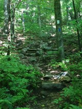 The start of the Boulder trail - steep, with steps.