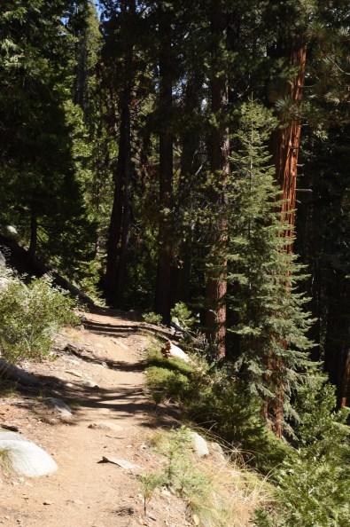 wuksachi-trail