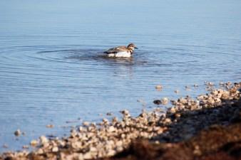 birds-at-bird-island-3