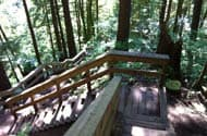 Baden Powell Trail, North Vancouver