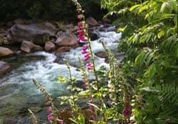 Lynn Creek on Lynn Loop, North Vancouver