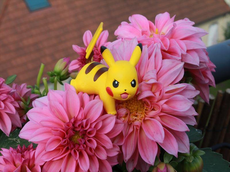 pokemon-1529246_1280_R