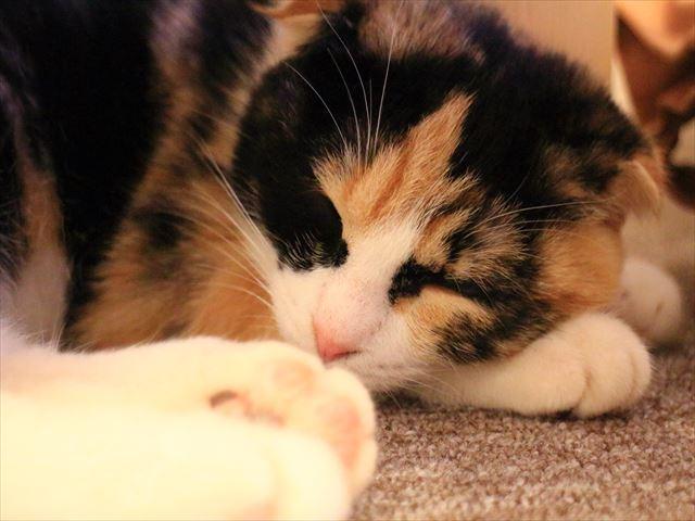 富山市内で癒される!猫カフェ「コーニャーカフェ」のレポート