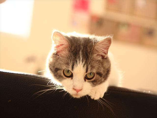 岐阜の猫カフェでたくさんの猫とお友達になってきた!笠松町の「猫カフェ レガーレ」