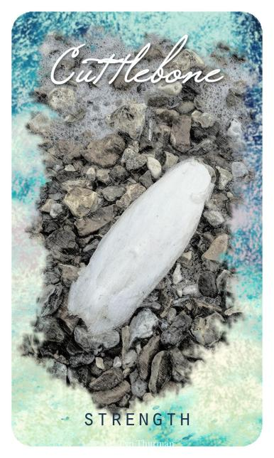 Cuttlebone from The Ocean Oracle