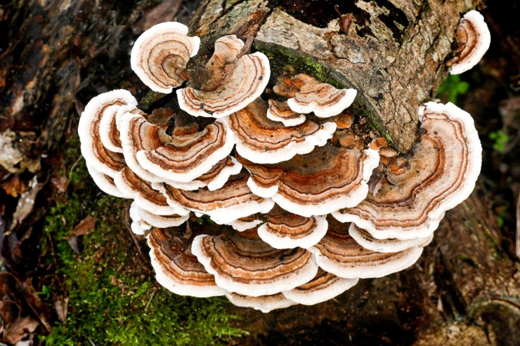 """Louie Schwartzberg's Documentary, """"Fantastic Fungi"""" Is A Psychedelic-Fueled Ecology Lesson"""