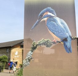 This Kingfisher provides oversight to all entrants to the centre