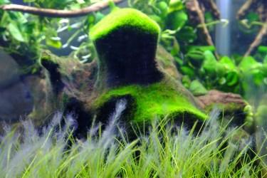 水草や生き物に水カビが!寄生する水カビを撃退する方法
