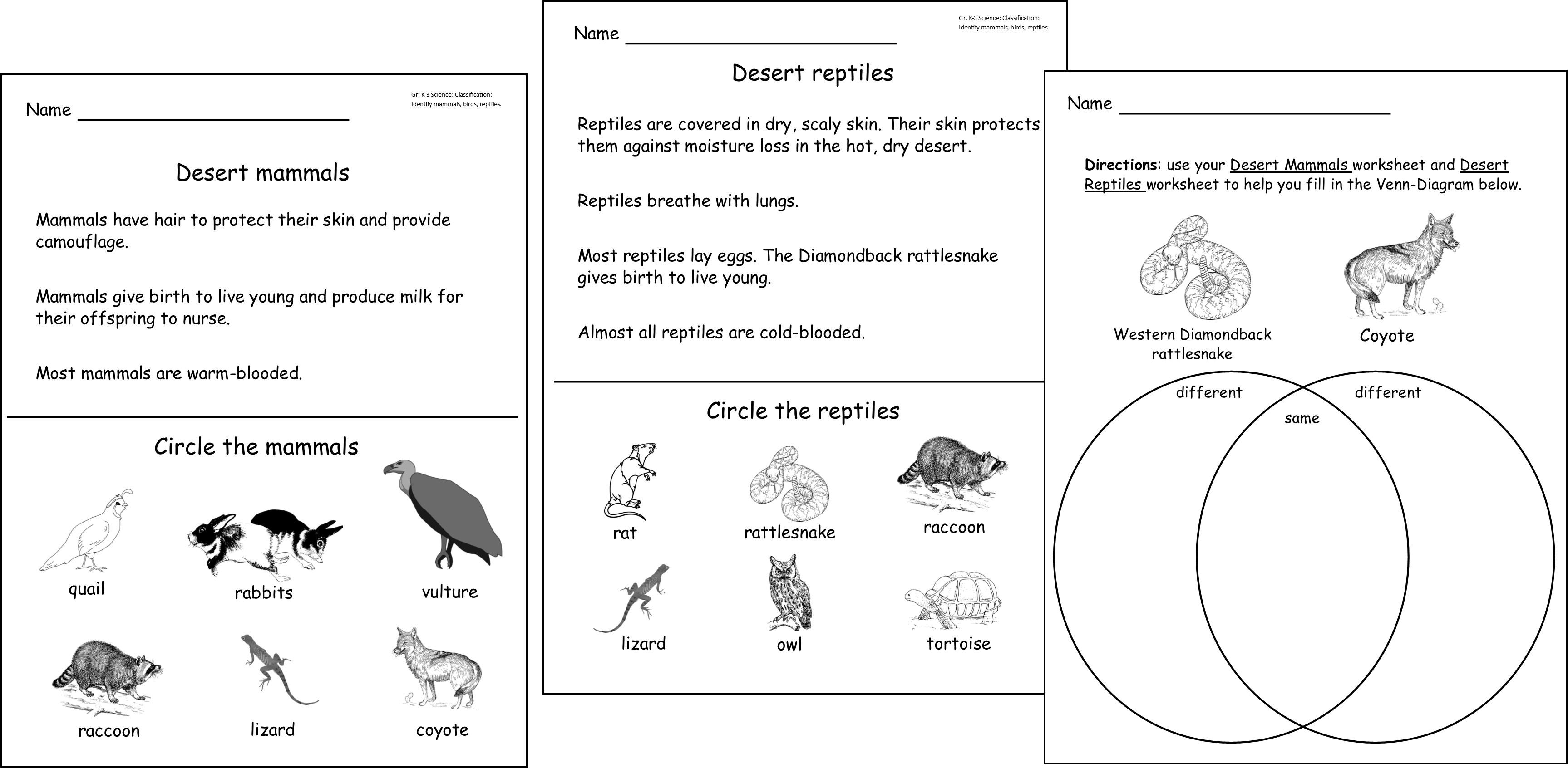 Reptiles Worksheet For Grade 3