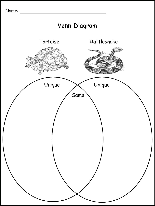 My Book About The Western Diamondback Rattlesnake Grades K