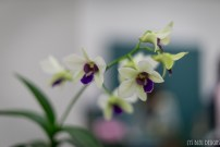 orchids w (36 of 101)