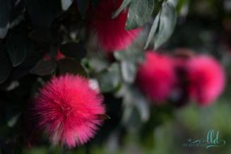 flowers coronado