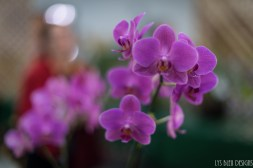 orchids w (50 of 101)