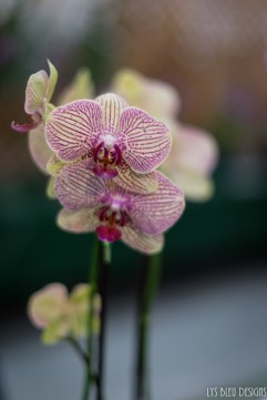 orchids w (54 of 101)