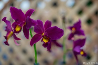 orchids w (80 of 101)