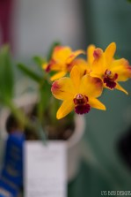 orchids w (81 of 101)