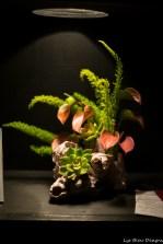 coronado flower show w (109 of 240)