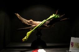 coronado flower show w (115 of 240)