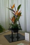 coronado flower show w (147 of 240)