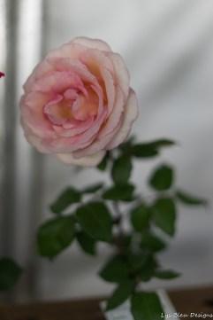 coronado flower show w (161 of 240)