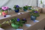 coronado flower show w (189 of 240)