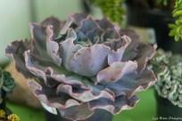 coronado flower show w (197 of 240)