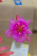 coronado flower show w (21 of 240)