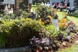 coronado flower show w (4 of 240)