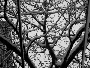 Wires & Branches