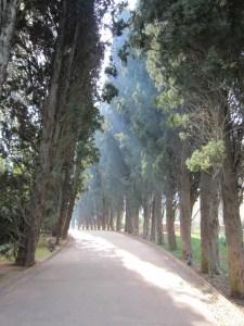 alhambra-338587_1280