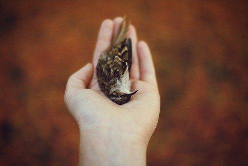 dead-bird-in-hand1