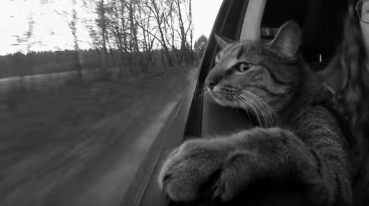 cat-in-the-car