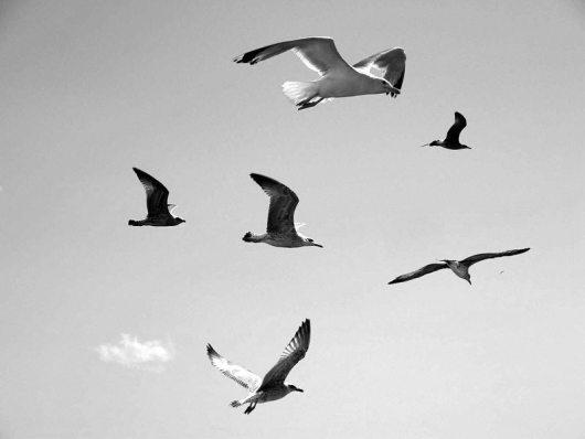 seagulls-flight-freedom
